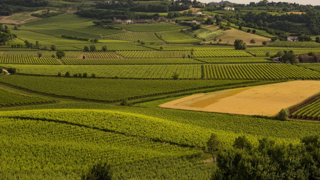 PerCorsi - Le ville Palladiane e i vini dei Colli Berici