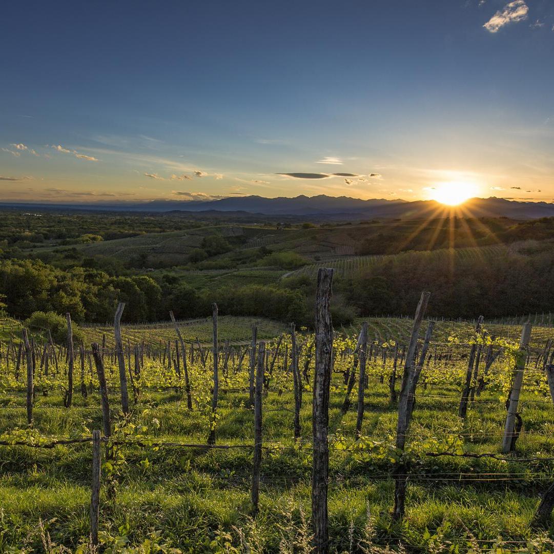 Alto Piemonte: Seminario con Armando Castagno