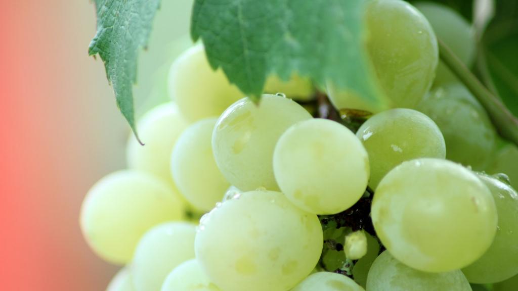 Durella : l'uva poliedrica