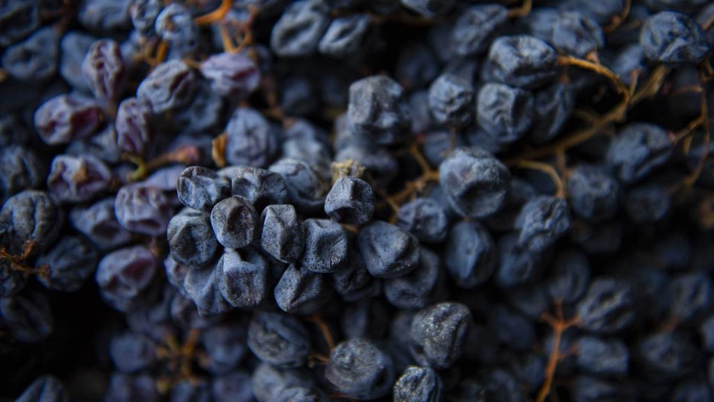 Il riposo dell'uva