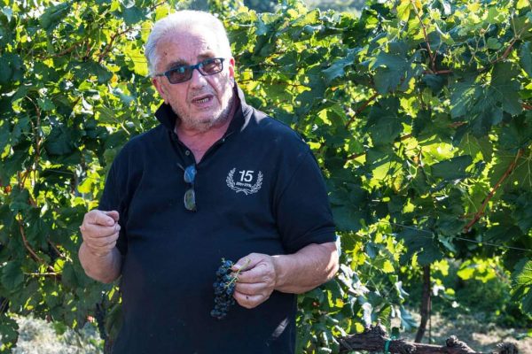 Il Sommelier in vigna